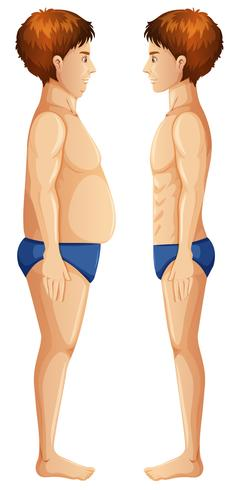 Human Body Fat and Slim vector