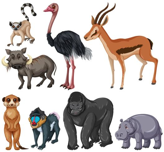 Different kind of wildlife animals vector