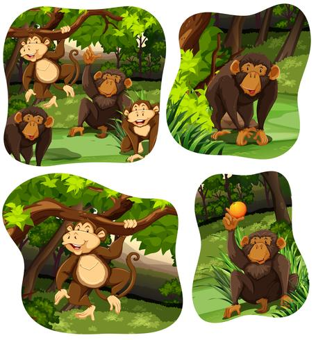 Monkeys living in the deep forest vector