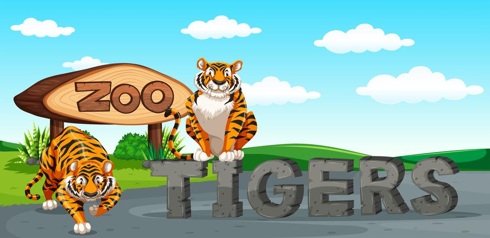 Dois, tigres, em, a, jardim zoológico