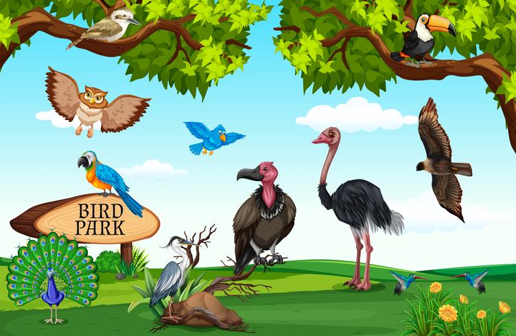 Wild animals in the field - Download Free Vector Art, Stock Graphics & Images