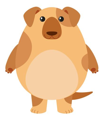 Brown dog on white background