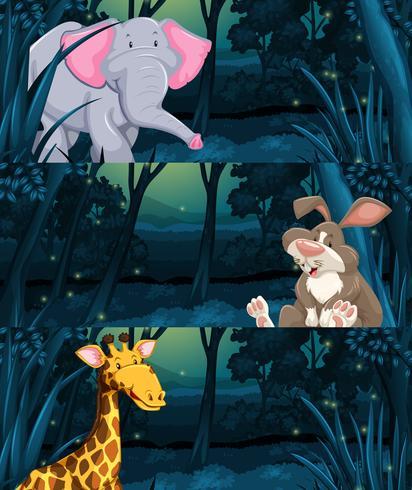 Animales salvajes en la selva por la noche.