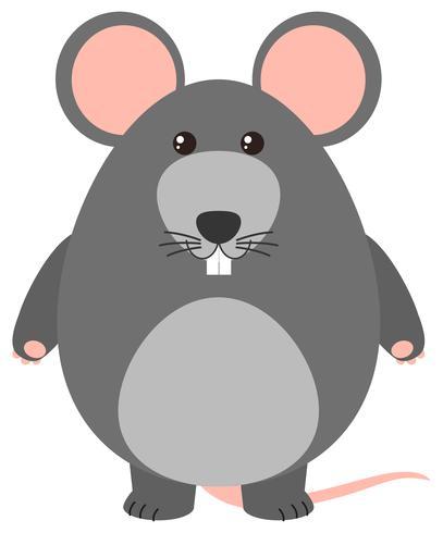 Rato cinzento em fundo branco