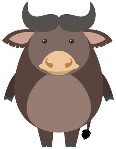Grå buffel på vit bakgrund