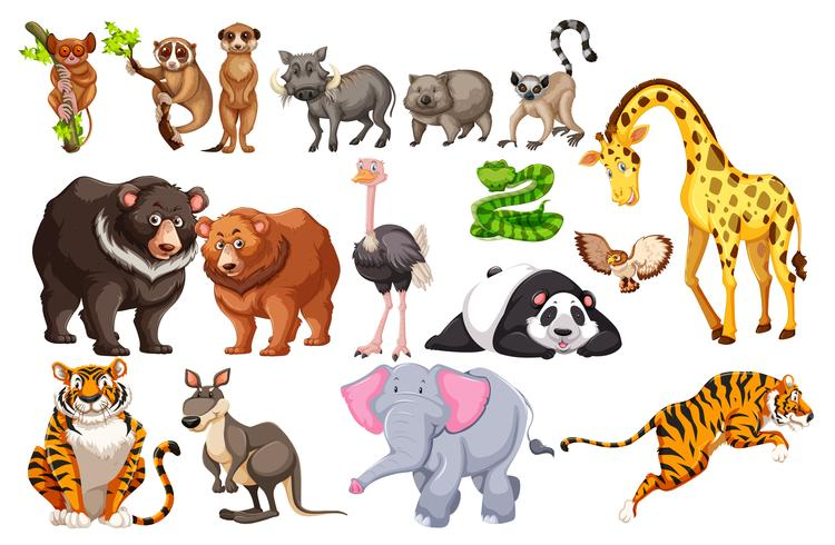 Um conjunto de animais selvagens no fundo branco vetor