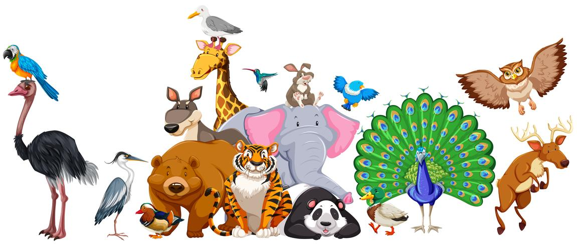 Animales salvajes de pie en grupo.