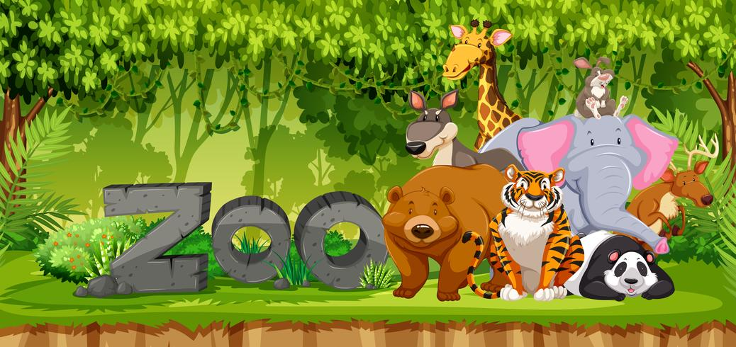 Set of zoo animals in jungle vector