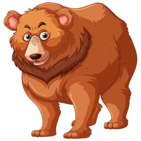 Grizzly con pelliccia marrone