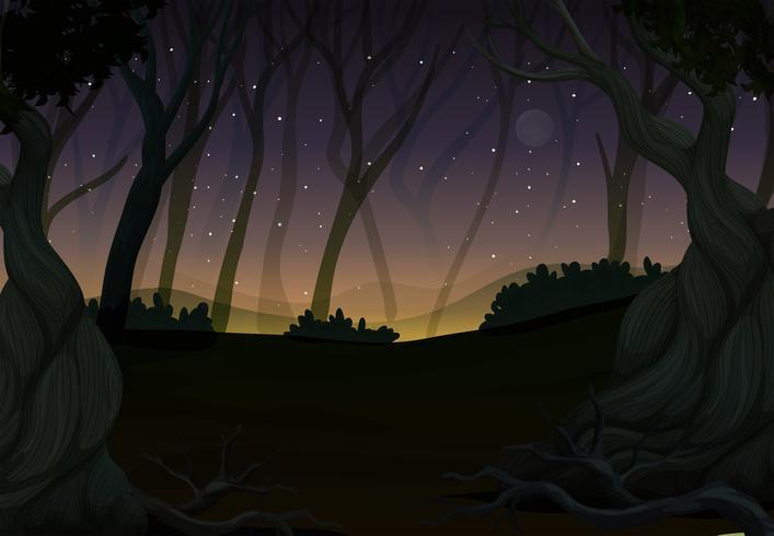 Cena, com, fireflies, em, floresta, à noite