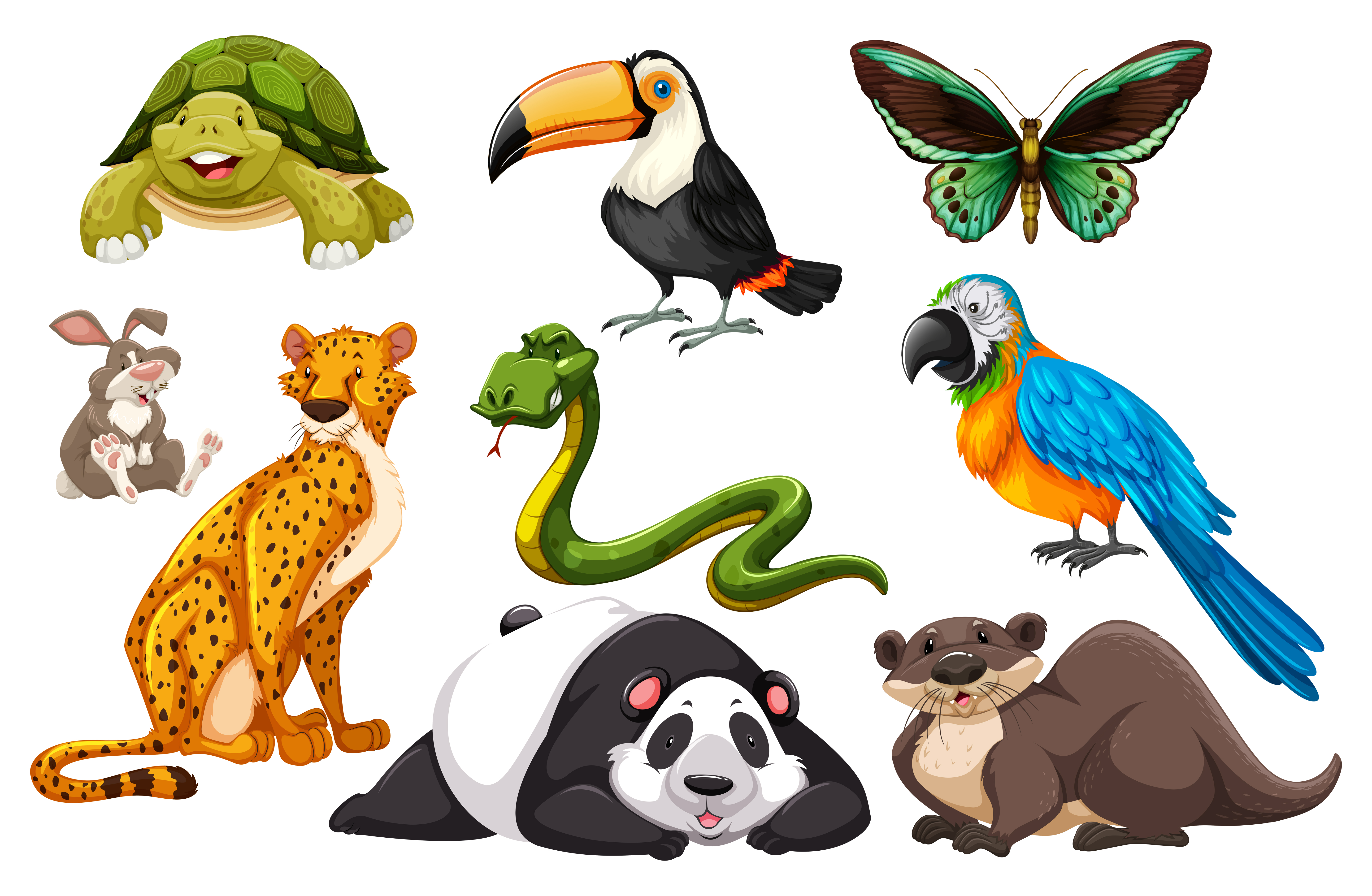 animals different kinds wild illustration vector animal cheetah turtle clipart mammal
