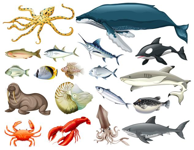 Set di diversi tipi di animali marini