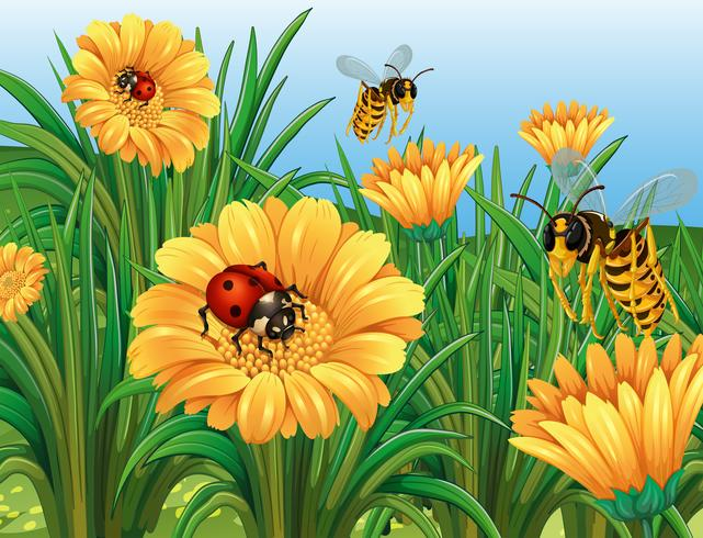 Ladybugs and wasps flying in garden