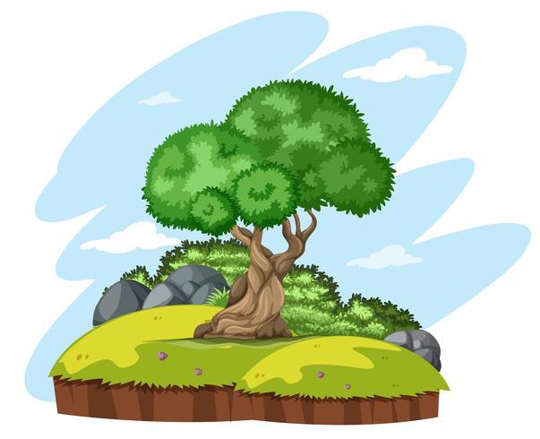 Geïsoleerde boom in de natuur