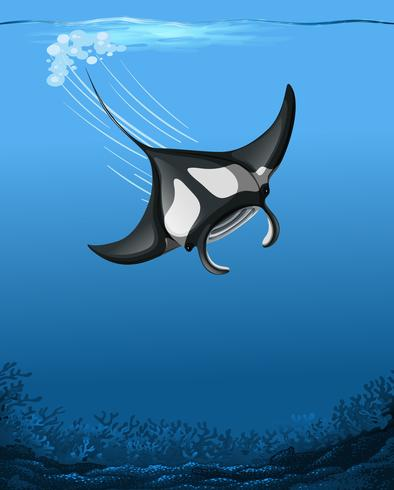 A manta ray underwater scene