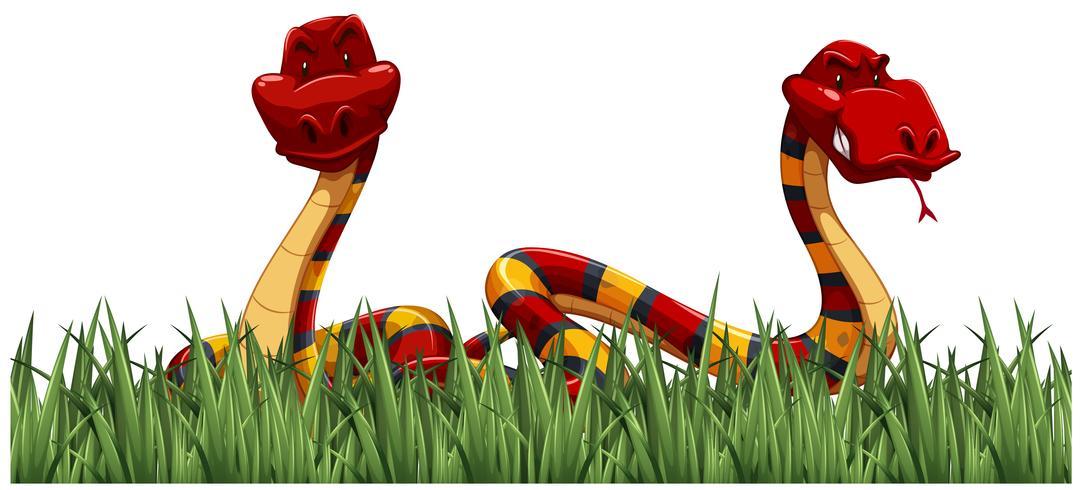 Dois, cobras, ligado, grama verde