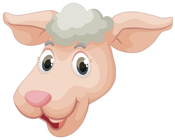 Ett ansikte av får