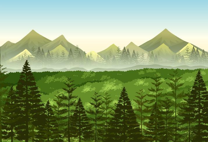 Escena de fondo bosque de pinos