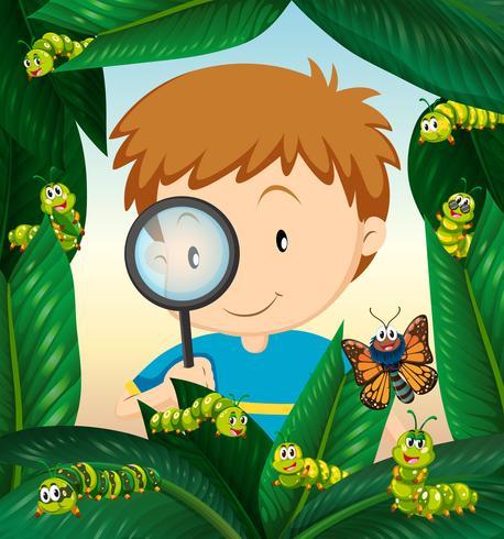 Menino, observar, inseto, vida, ligado, a, folhas vetor