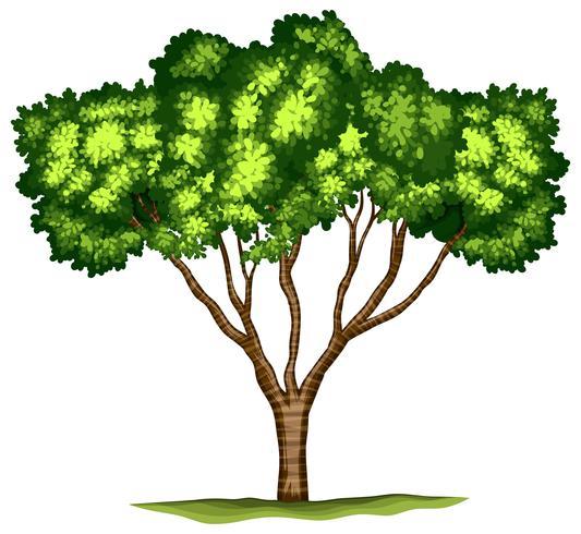 Árvore isolada no fundo branco