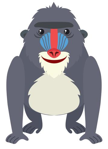 Baboon with happy face
