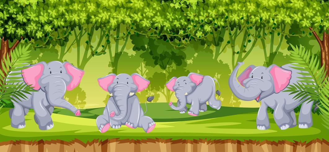 Elefantes en la escena de la selva