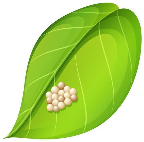 Moth eggs on leaf