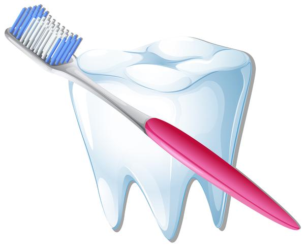 Uno spazzolino da denti e un dente