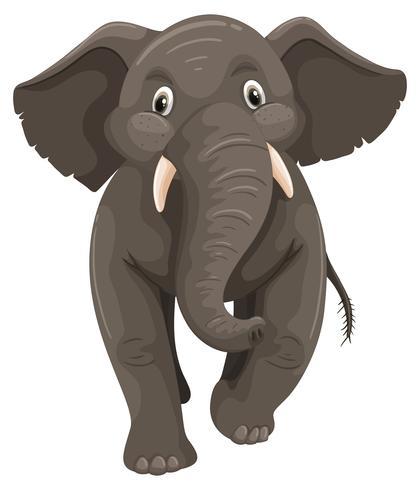 Elefante bebé sobre fondo blanco