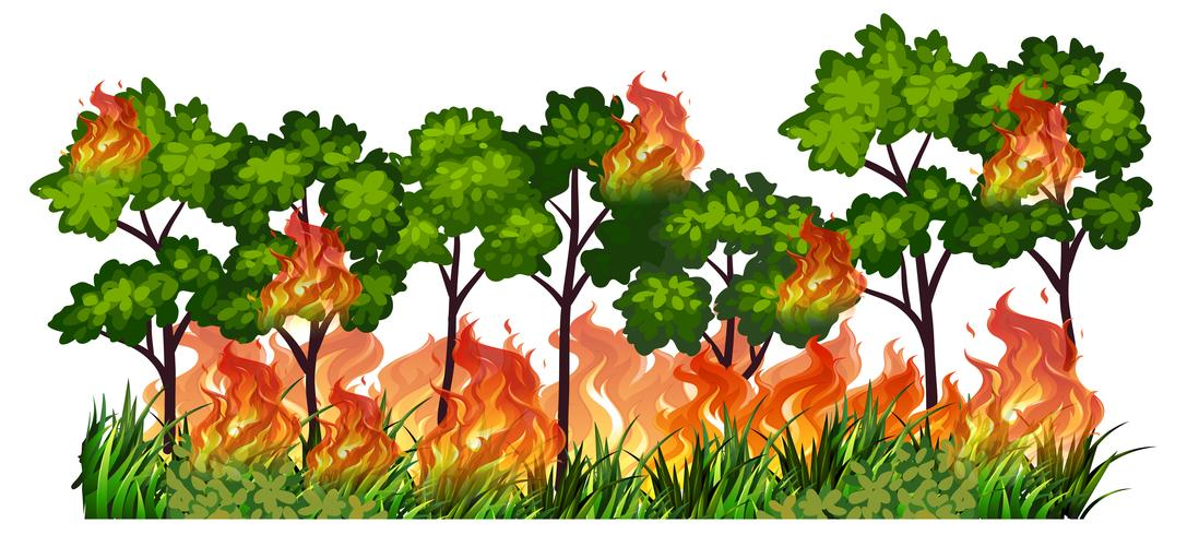 Fogo de natureza árvore isolada