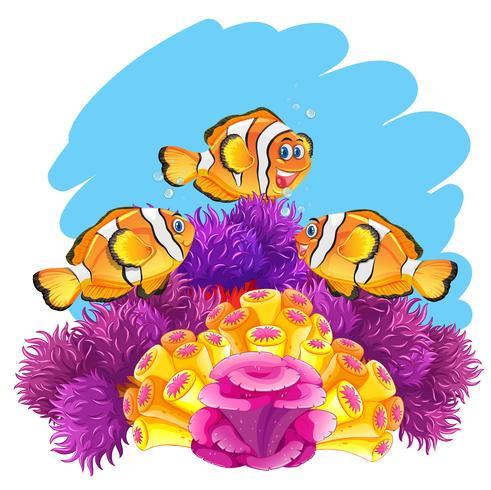 Pez corona jugando en el arrecife de coral