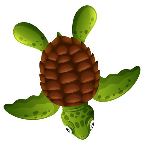 Uma tartaruga verde no fundo branco