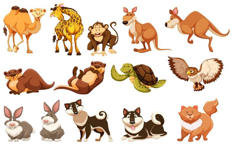 Conjunto de diferentes tipos de animais