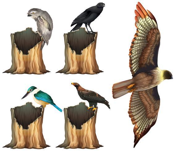 Aves silvestres en tronco