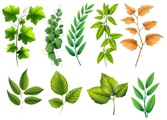 Diferentes tipos de hojas verdes.