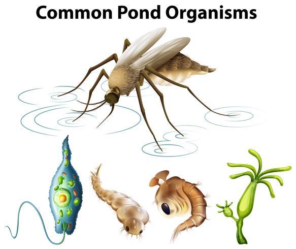 Common pond organisms diagram
