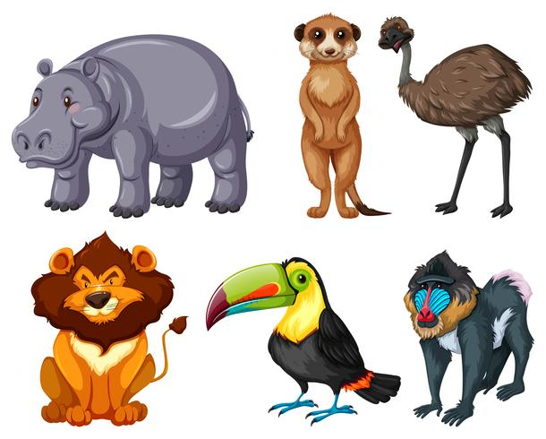 Different kinds of wild animals set vector