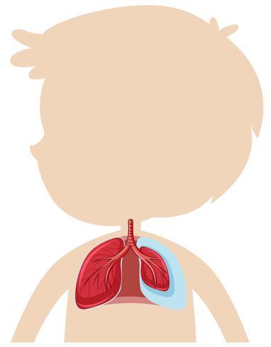 Une anatomie du poumon humain