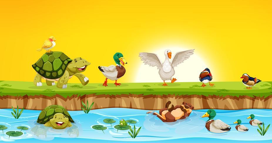 Diferentes animales en la escena del estanque.