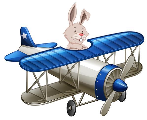 Um, coelho, montando, avião