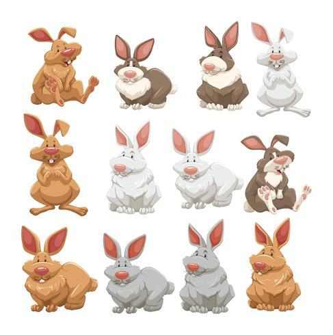 Conejos con diferentes colores de piel.