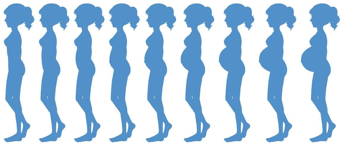Neun Monate Schwangerschaftsprogression
