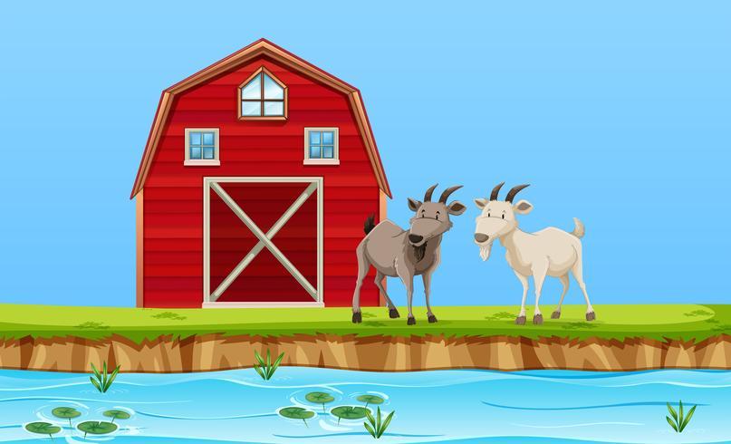 Dos cabras en escena de la granja