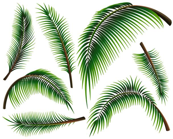 Different sizes of palm leaves