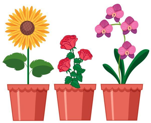 Un set di fiori in vaso