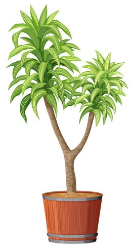Uma plantação de árvores no pote