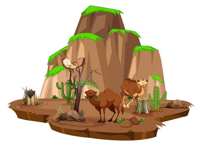 Scène met kamelen en uil in het veld vector