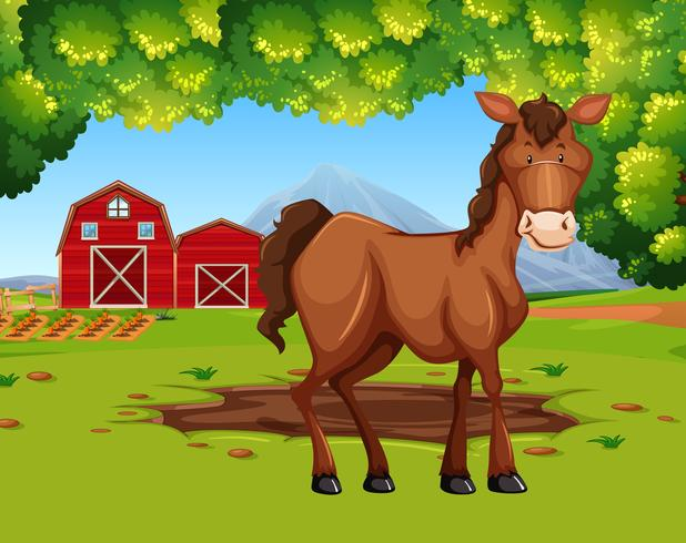 Paard in de landbouwgrond