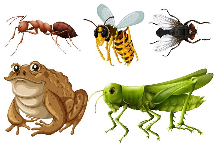 Set of different kinds of insects vector