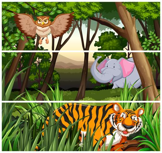 Wildlife in the jungle vector